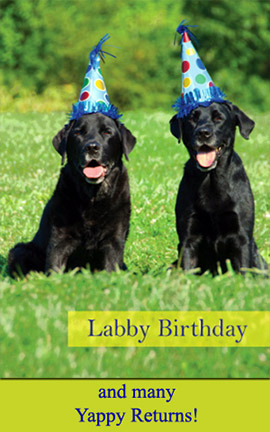 Labby Birthday ... and many Yappy Returns!